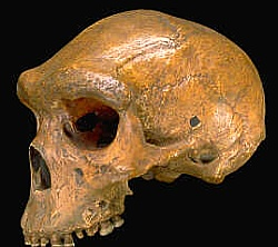 The Kabwe skull: not a 'Neanderthal', not shot by a bullet, not 38,000 years old