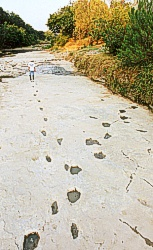 The so-called 'Taylor trail', perhaps the most famous set of 'man prints' on the Paluxy River, Texas