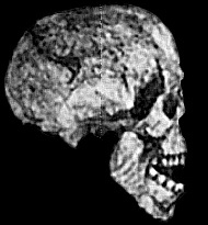 The infamous 'Reck skull': a modern human skull claimed by its discoverer to be a million years old and the discovery that set Louis Leakey to work in East Africa